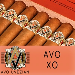 AVO XO Cigars at Discount Prices | Smokers Discounts